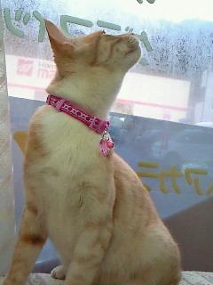キャロル猫7