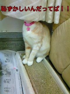 キャロル猫恥ずかしいんだってば!!