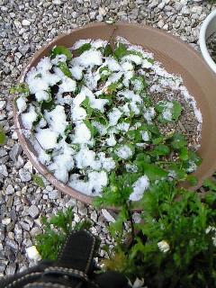 わずかな雪