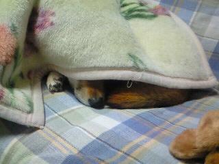 モモ様の昼寝3