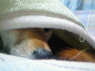 モモ様の昼寝2