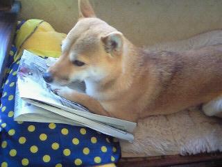 モモ様新聞を読む2