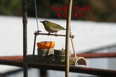 めじろ加工4