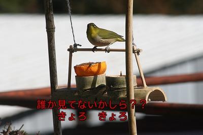 めじろ加工3
