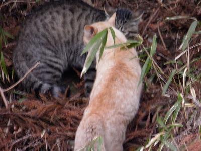 野良猫の喧嘩2