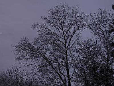 2月29日雪