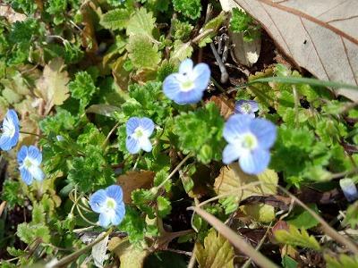 一足早い春の花