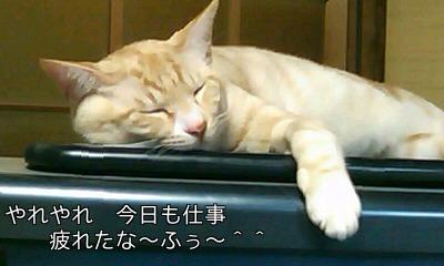 疲れた猫加工