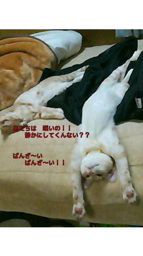 ばんざい猫