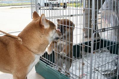 子犬とモモ様2