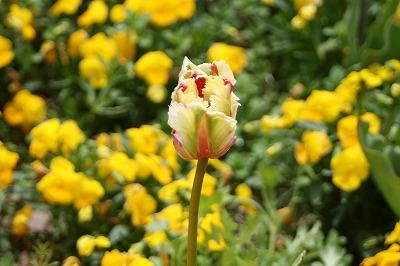 花の公園27