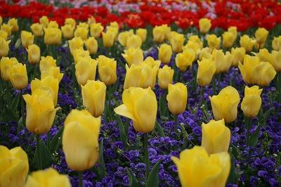 花の公園8