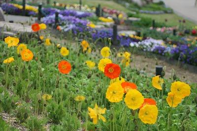 花の公園36」