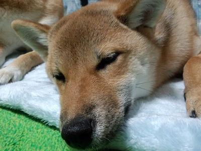 kokoの寝顔