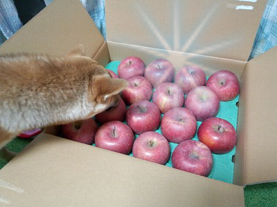 りんご2加工