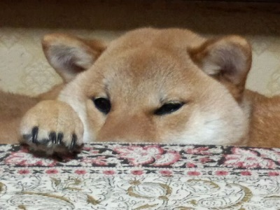 ココの眠り3