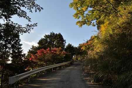 快晴の林道
