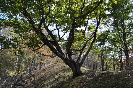 道をふさぐ木