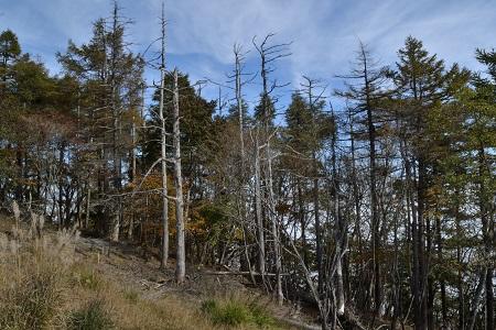 北側の木立