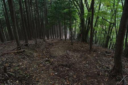 杉の下山道