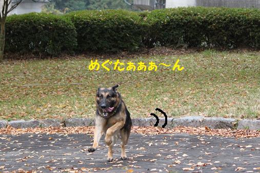 201011166.jpg