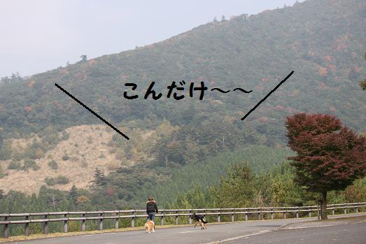 201011177.jpg
