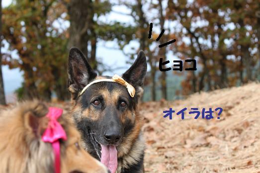 201011248.jpg