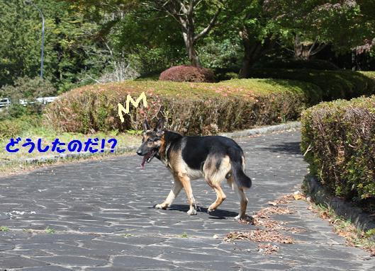 201011711.jpg