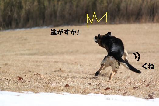 20111124_20110112202158.jpg