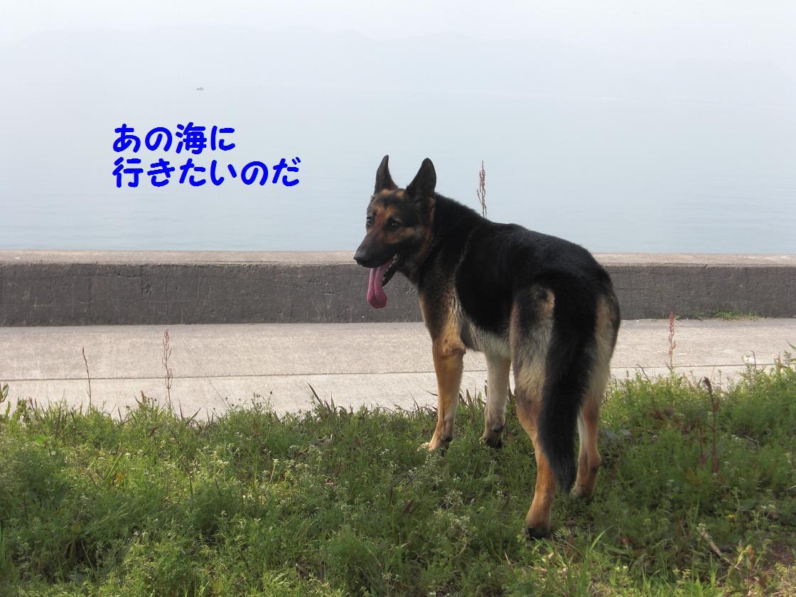 CIMG2276.jpg
