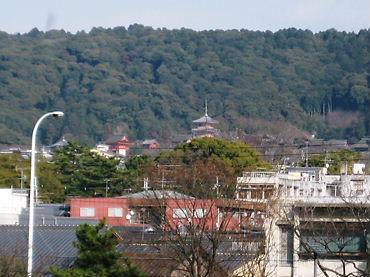 京都 キンカーオ