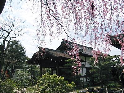 京都 法金剛院