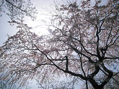 京都 花の寺