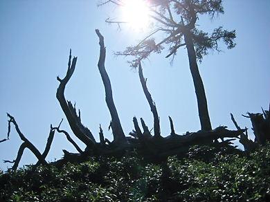 徳島 剣山