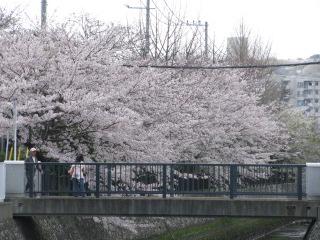 2010-4-3-7.jpg