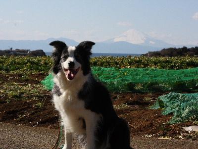 120218富士山1