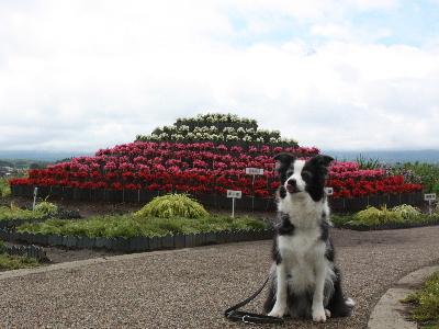 120702大石公園(富士山・芽琉1)