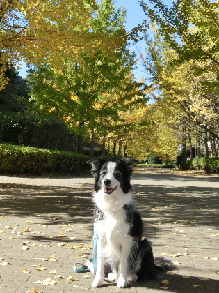 121116gN公園3