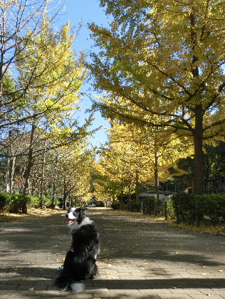 121116gN公園2