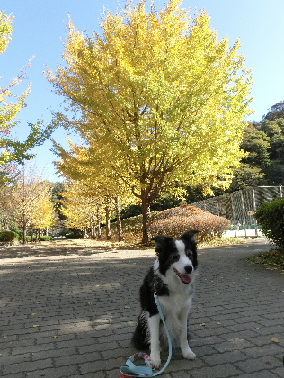 121116gN公園11