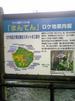 ガジュマルの木3