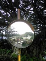 ガジュマルの木1