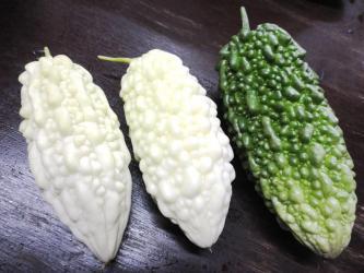 白ゴーヤ収穫2
