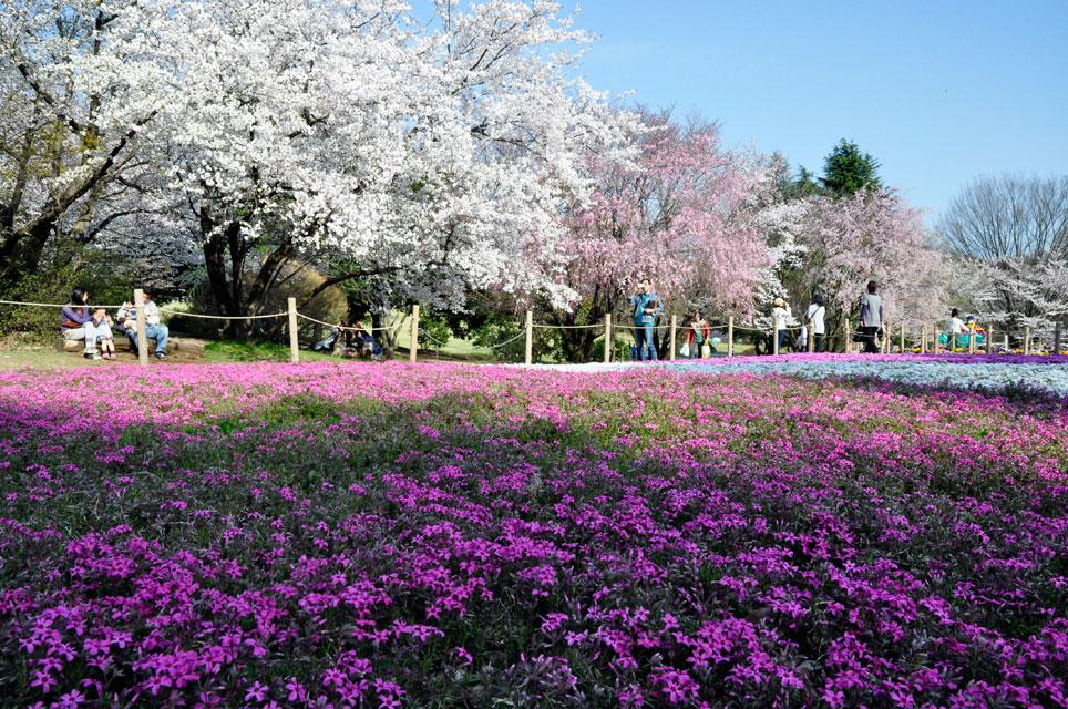 所沢航空公園_03