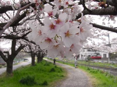 2010_04100038.jpg