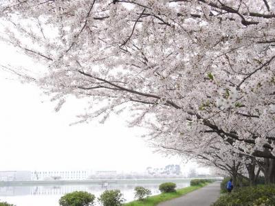 2010_04110008.jpg