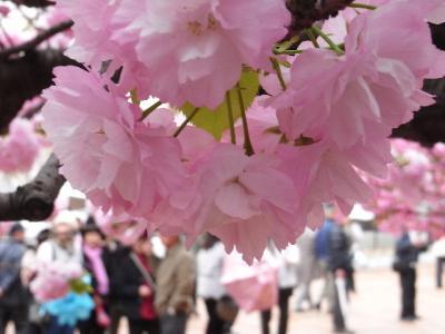 2010_04160136.jpg