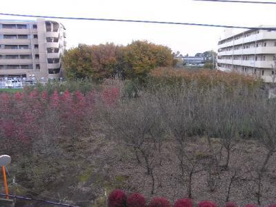2010_11230006.jpg