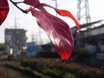 2010_11270050.jpg
