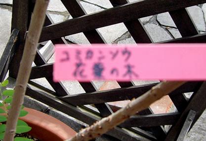 CIMG2688-20060416.jpg